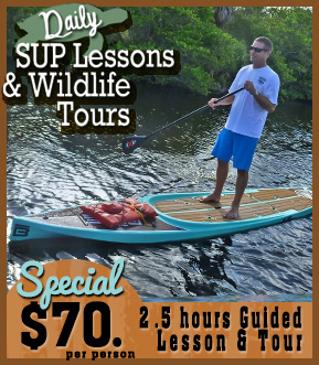 paddle board lessons